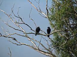 dangling conversation